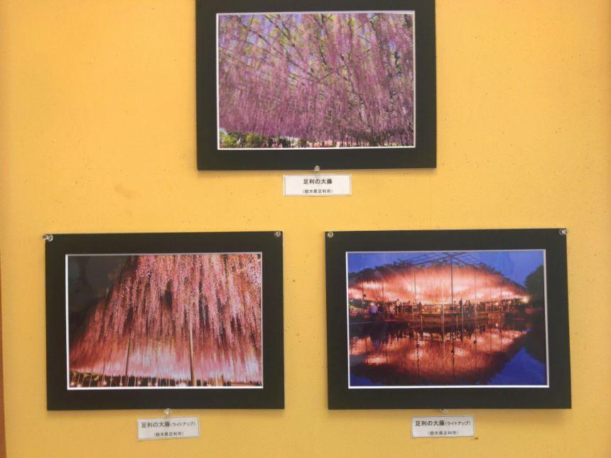 壁に飾られた写真作品